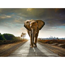 All Seasons Posters olifant 80 x 60 tuinposter